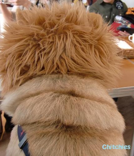 ライオンにしては、太りすぎ?