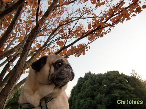 秋空チッチ