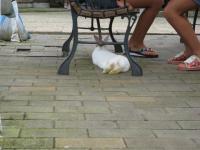 どこでもウサギ