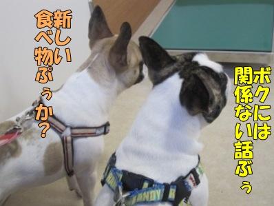 5-1_20120220144036.jpg
