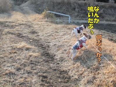 7-1_20120220131818.jpg