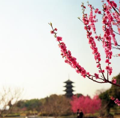20110401_Kokubunji_Autocord10002.jpg