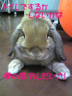 Image294fc2.jpg