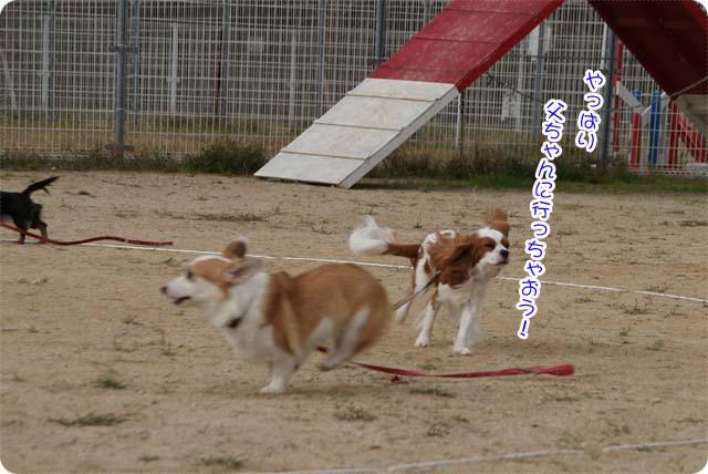 20111113_24.jpg