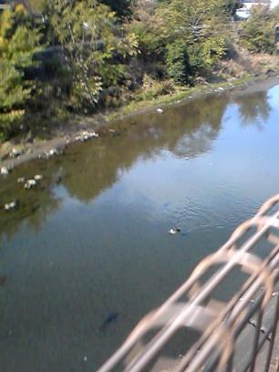 river_20091030141909.jpg