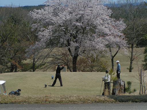 H23.4.21桜②