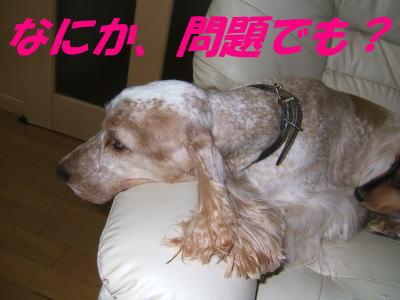 ロースト犬