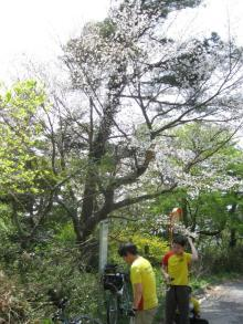 WCC46代私用ノート blog-桜