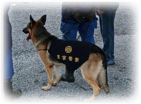 皇宮警察犬