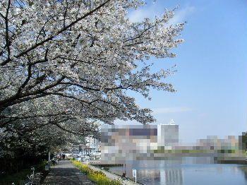 2011_04100007.jpg