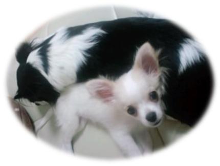 dog1_20111013005901.jpg