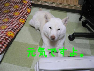 2_20120204215825.jpg