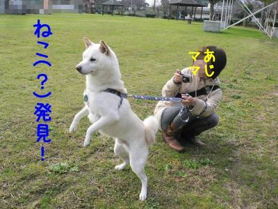 4_20111127214116.jpg