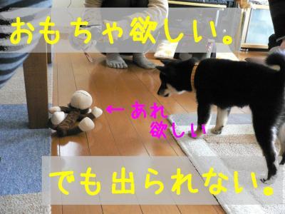5_20120204220552.jpg