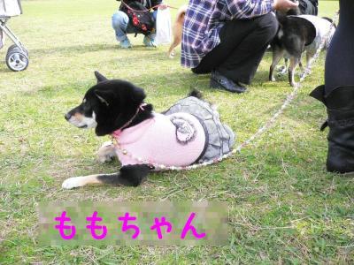 7_20111127220434.jpg