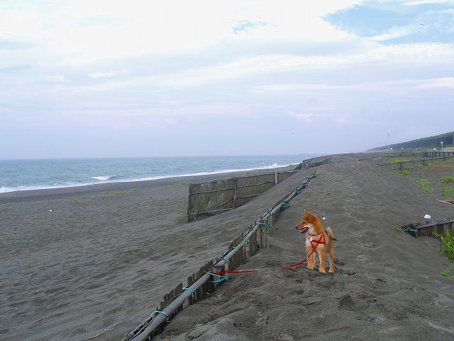 s-iyppP7259524ごろ1海