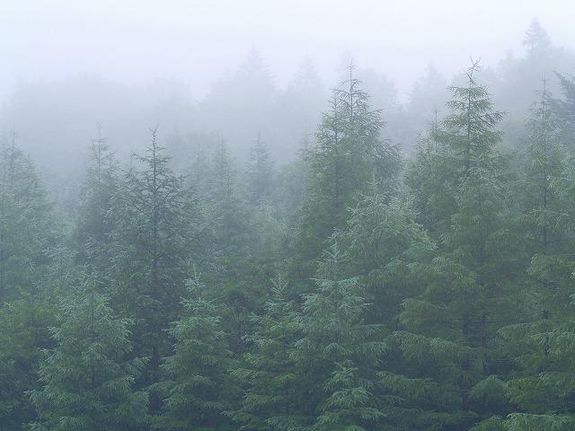 s-iyppP8010048霧の林