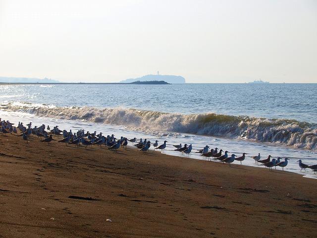 s-iyppP8293999pi江ノ島とカモメ