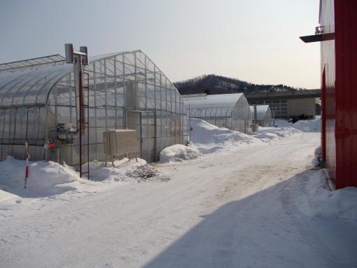 20120305_農村活性化センターのハウス