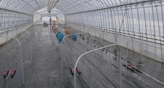20120413_4番トマト定植