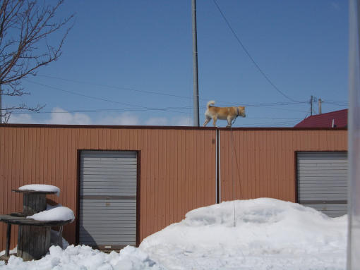 20120408_大ちゃん屋根に乗る