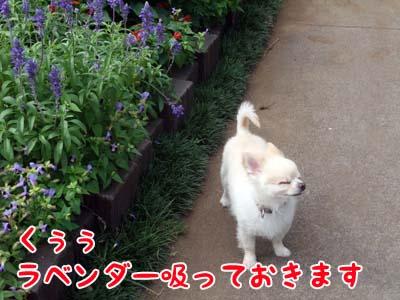 ochimasu2