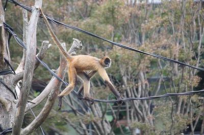 池の島には器用な猿さん