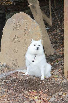 神奈川景勝50選酒水の滝