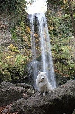 犬。滝修行をする。