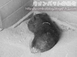 f0404(夜の寝姿)