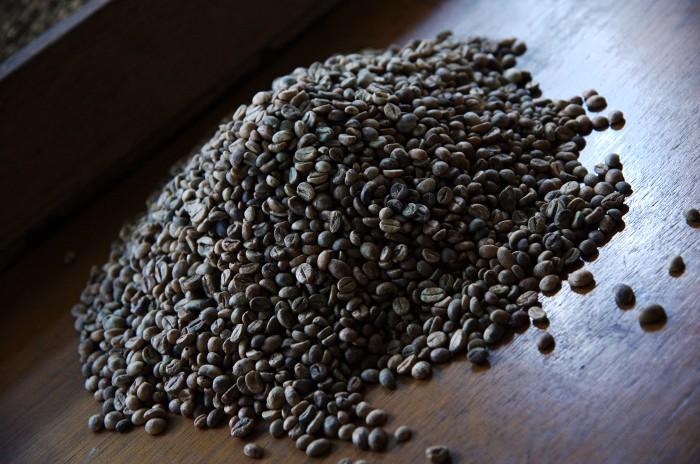 110903_オスの豆