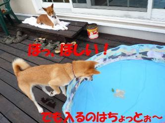 bP1080596.jpg