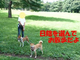 bP1080613.jpg
