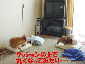bP1090118.jpg