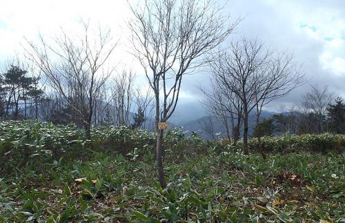 052高岳山頂-1