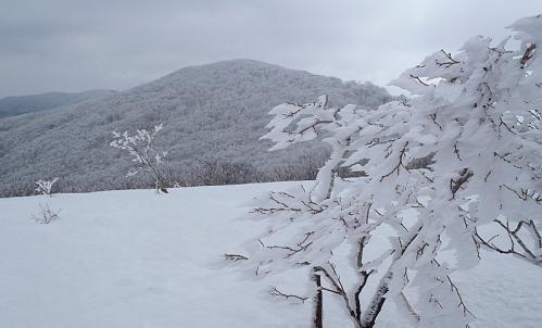 比婆山(毛無山~御陵) 017-1