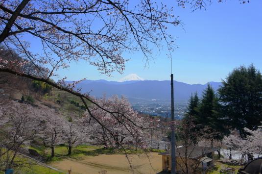 桜 配水場 富士山
