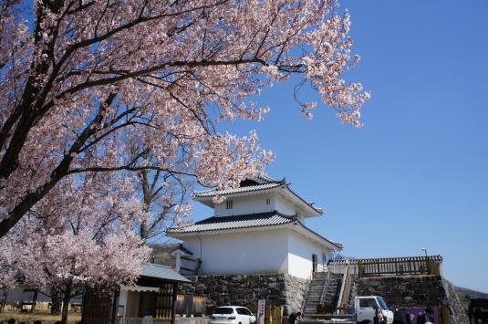 桜 舞鶴城公園 稲荷やぐら