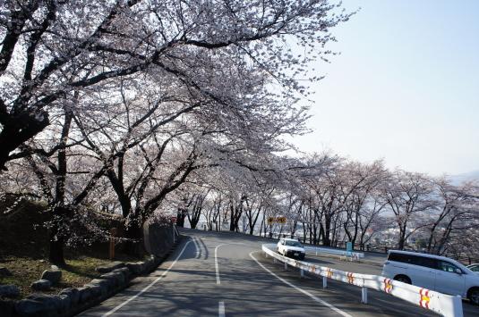 桜 八代 道路から