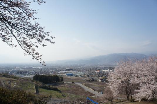 桜 八代 手前に桜