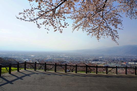 桜 八代 インさくら
