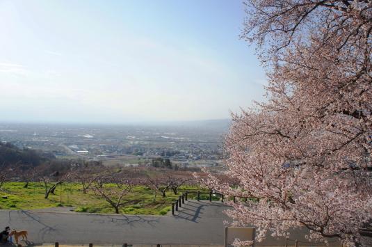 桜 八代 サイドさくら