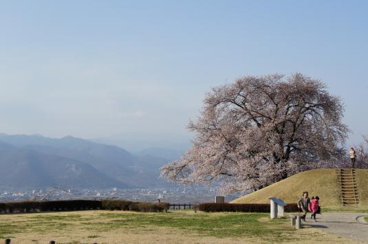 桜 八代 外観