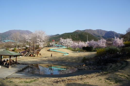 桜 八代 多目的広場
