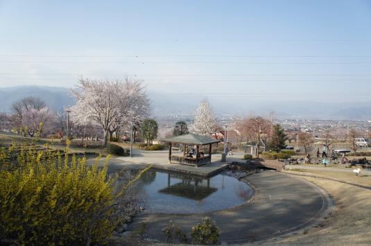 桜 八代 公園見下ろし