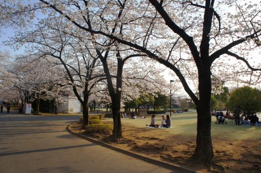 桜 小瀬 花見客