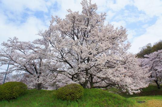 桜 配水場 大きい