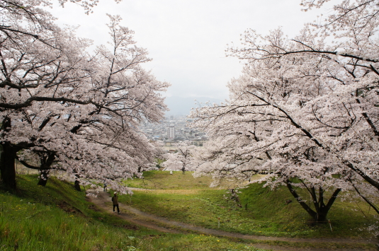 桜 配水場 坂