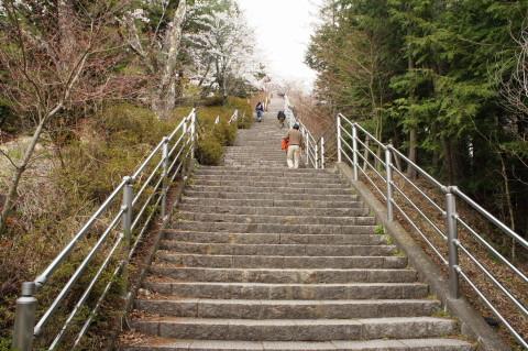 桜 新倉山 階段