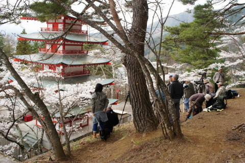 桜 新倉山 カメラマンたち